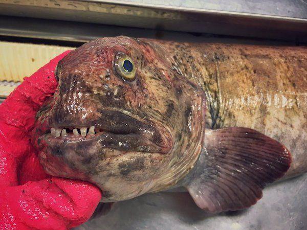 deep-sea-creature-20151223-18