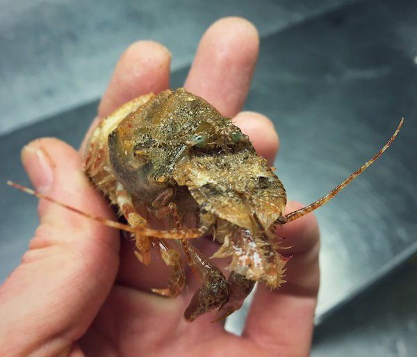 deep-sea-creature-20151223-6