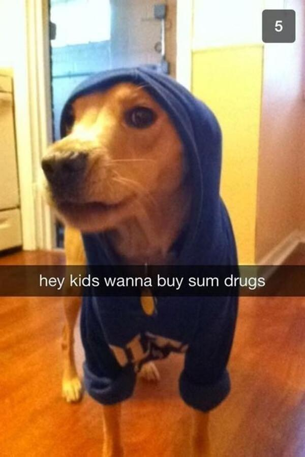 Collection Of Funny Snapchat