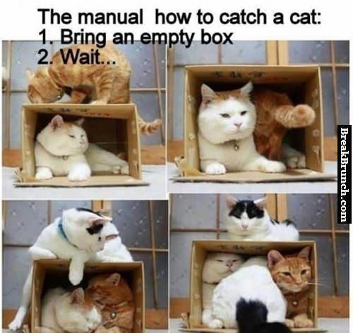 How to catch cats