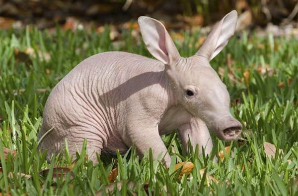 15 Strange Animals That Will Confuse Your Mind
