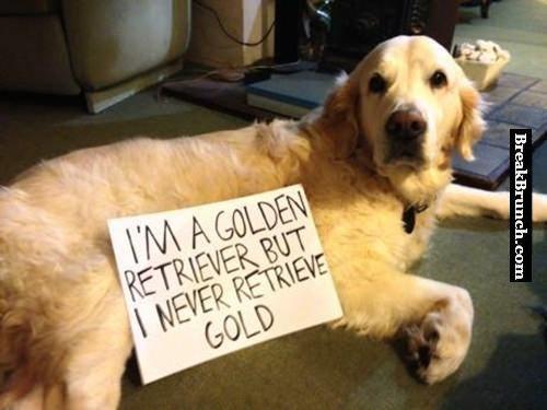 The sad story of a golden retriever