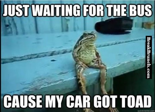 Just a toad waiting for bus