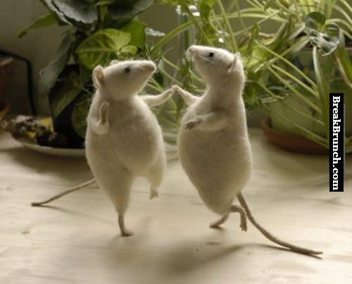 Two happy mouse dancing