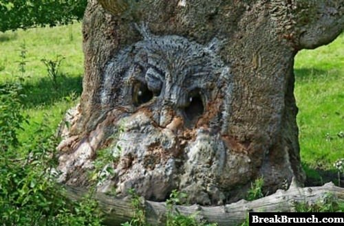 There is a owl in the tree