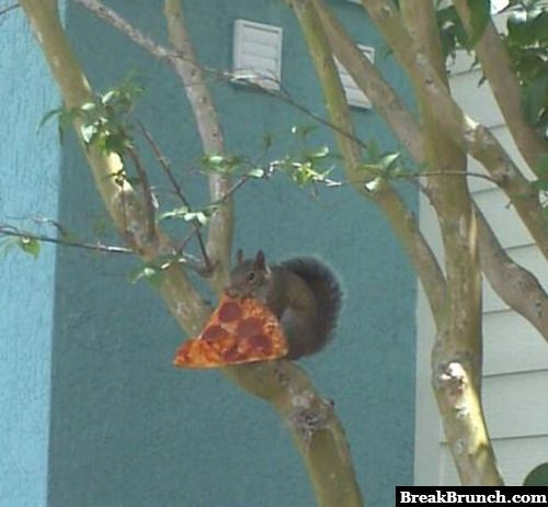 This is why squirrels are fat