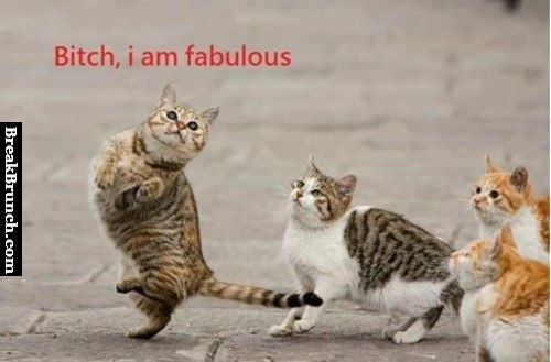 bitch-im-fabulous-funny-cat-picture