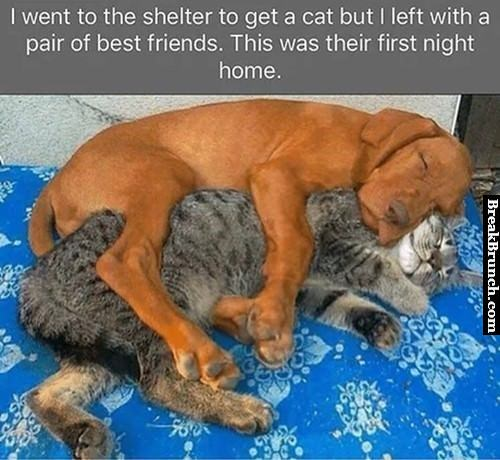 cat-and-dog-best-friends-lol-20180505