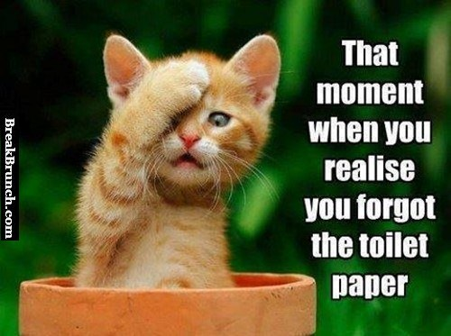 that-moment-when-you-forget-the-toilet-paper-funny-cat-picture