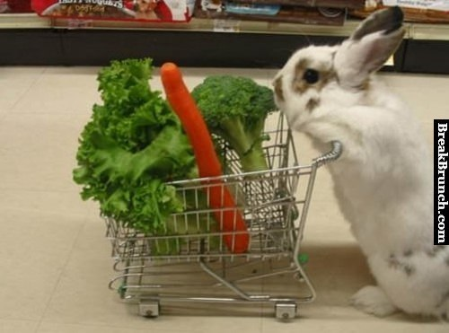 daily-grocery-list-funny-rabbit-picture