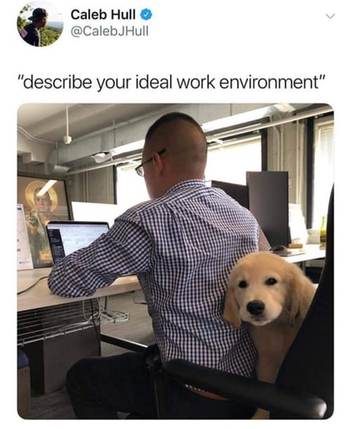 ideal-work-place-funny-picture-060918