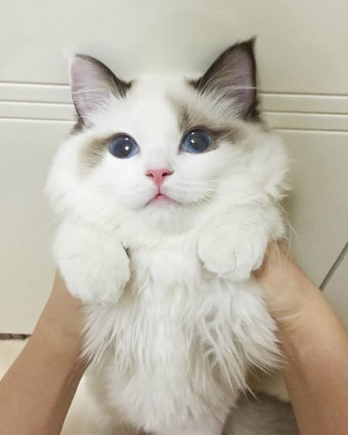 cutest-cat