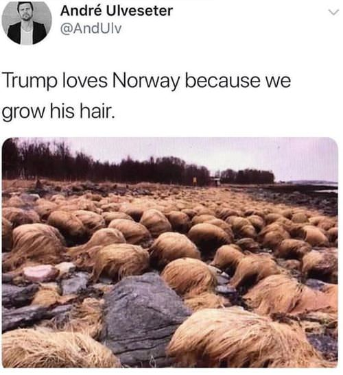 trump-love-norway-funny-picture-072718