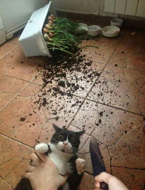 i-have-enough-lol-cat-081218