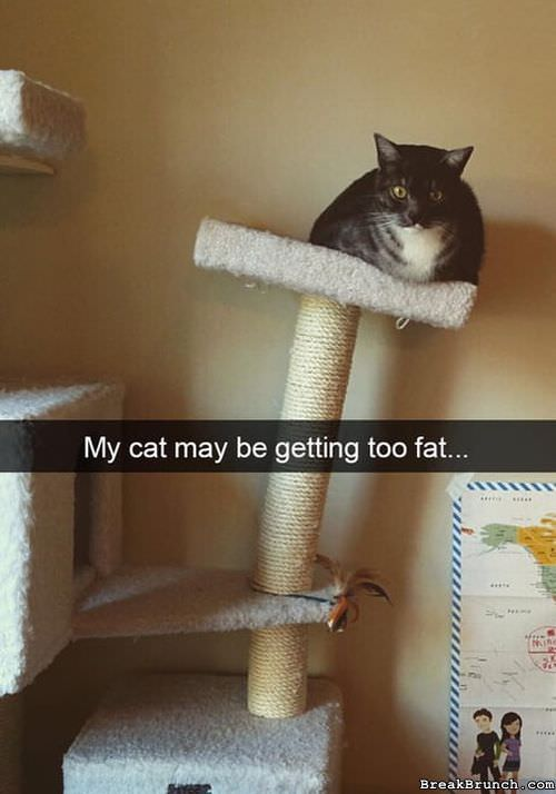 my-cat-may-be-too-fat-0819180939