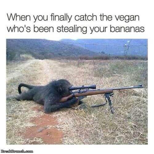american-sniper-monkey-0915181035