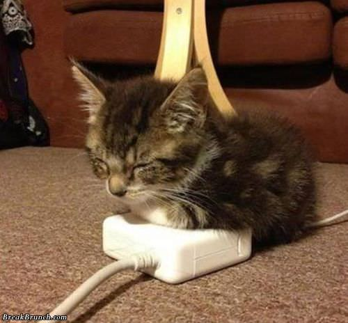 cute-cat-funny-picture-091118