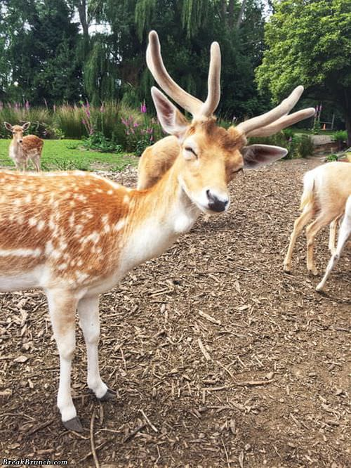 deer-smiling-funny-picture-091118