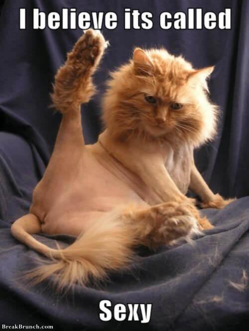 sexy-cat-0916180223