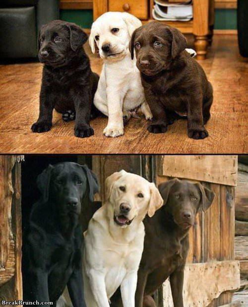 10-years-challebnge-dog-1021190140