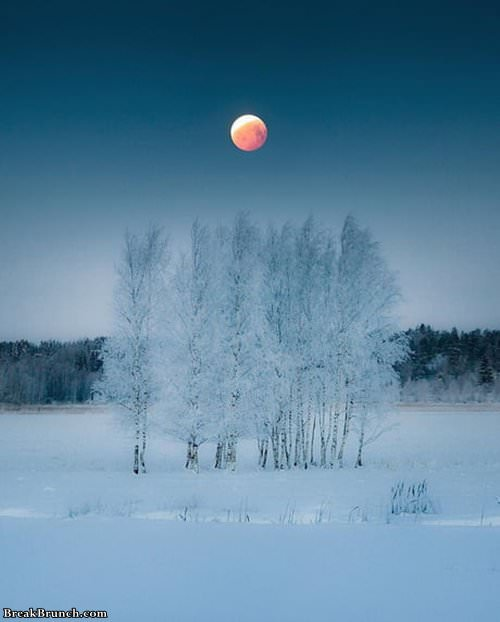 blood-mmon-in-finland-1021190110