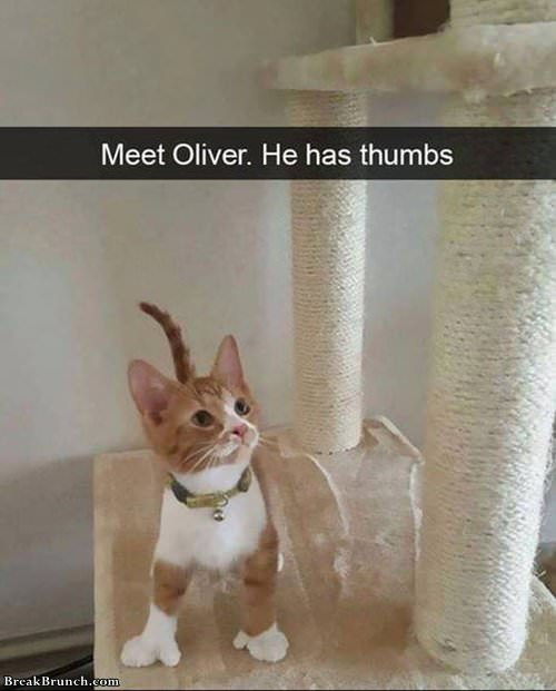 cat-oliver-with-thumbs-1021190110