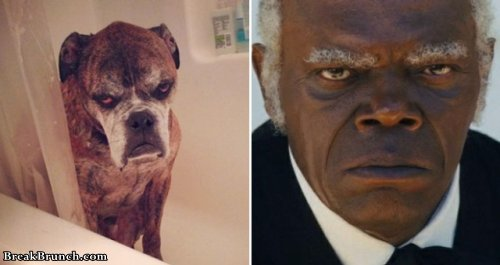 20 celebrities and their animal doppelgangers