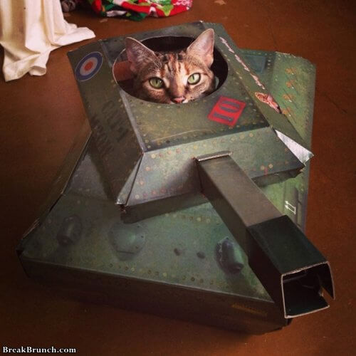 Cute cats in cardboard tanks (16 pics) - BreakBrunch Drunk Guy Comic Meme
