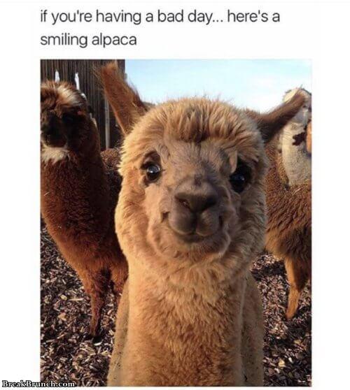 10 Funny Animal Memes - Breakbrunch-4623