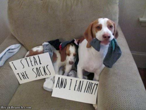 19 best dog shaming