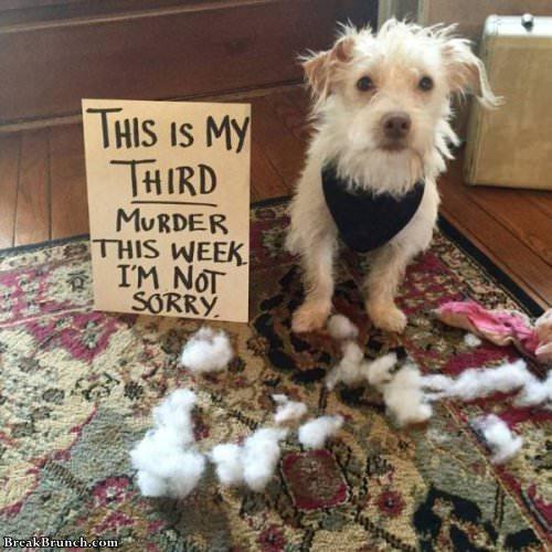 19 Best Dog Shaming Breakbrunch