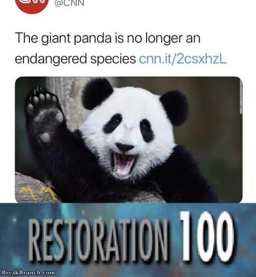 giant-panda-is-no-longer-endagered-species-funny-picture-1028191043