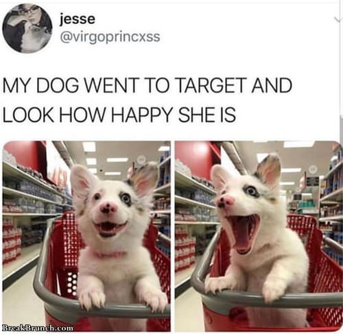 happy-dog-in-target-1012191044