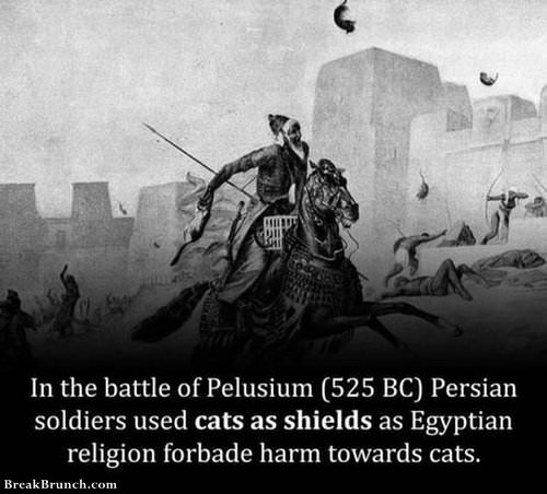 historyical-fact-1029190908