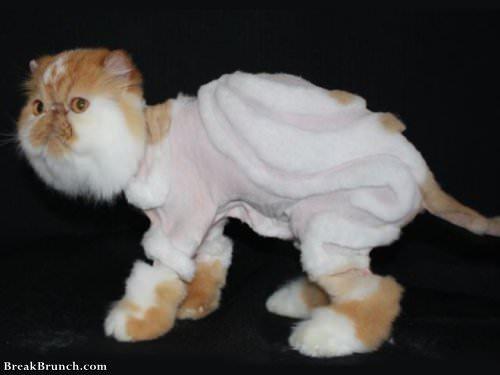 17 Crazy Weird Cat Groomings Breakbrunch