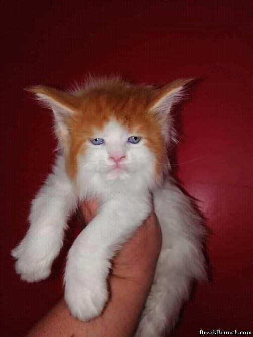 ed-sheeran-cat-0108190918