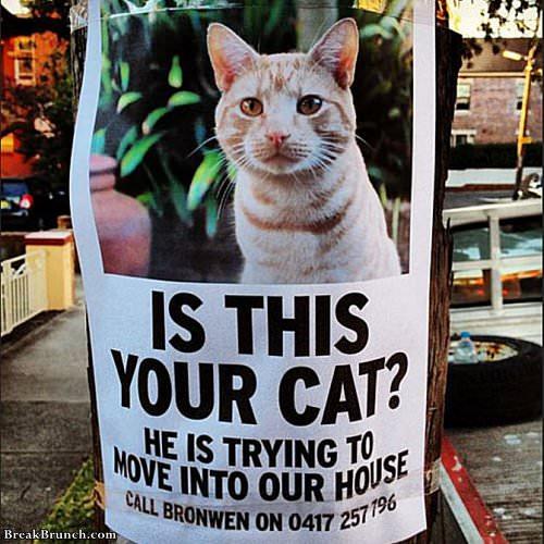 16 Funny Cat Memes Breakbrunch