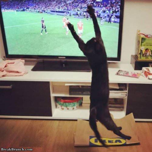 Funny Cat Pictures 22 Pics Breakbrunch