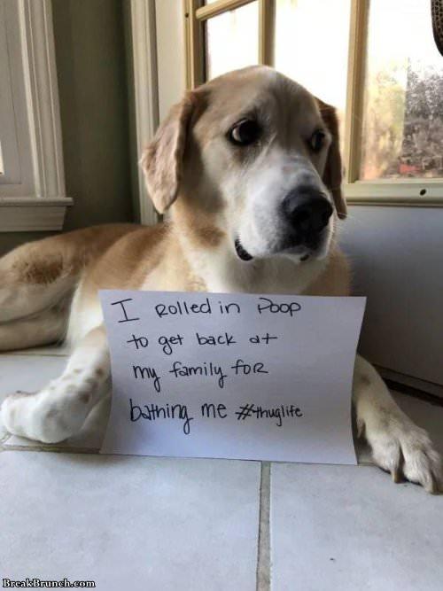 26 Funny Pictures Of Pet Shaming Breakbrunch