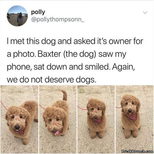 good-boydog-0103190506