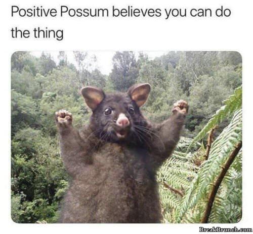 postive-possum-0104190225