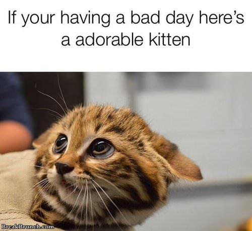 adorable-kitten-022619
