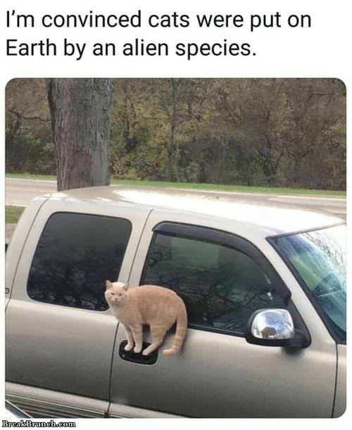 cat-is-alien-specy-022619