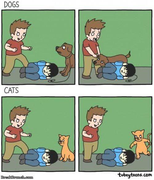 dog-vs-cat-022719
