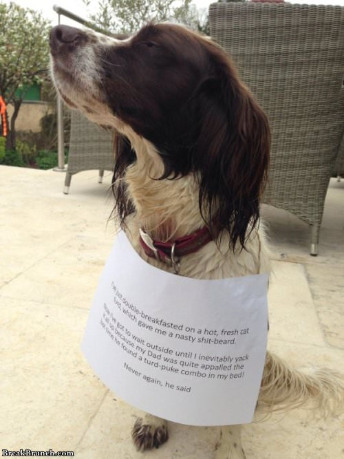 Another Round Of Funny Pet Shaming Breakbrunch