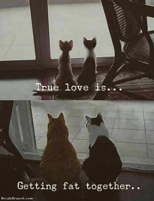true-love-is-getting-fact-together-021719