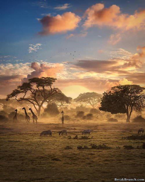 wildlife-of-zimbabwe-013119
