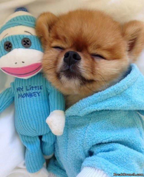aww-cute-dog-031519