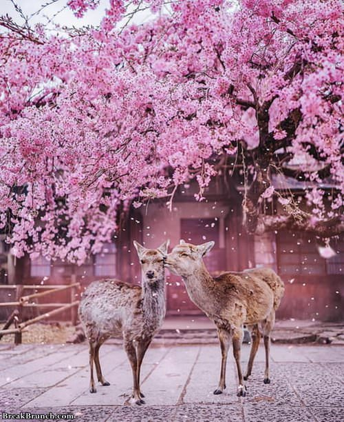 beautiful-kiss-at-kyoto-japan-020519