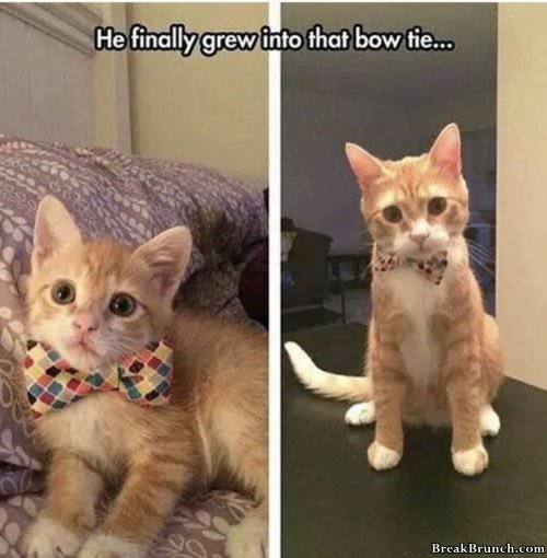 cat-with-bow-tie-031519